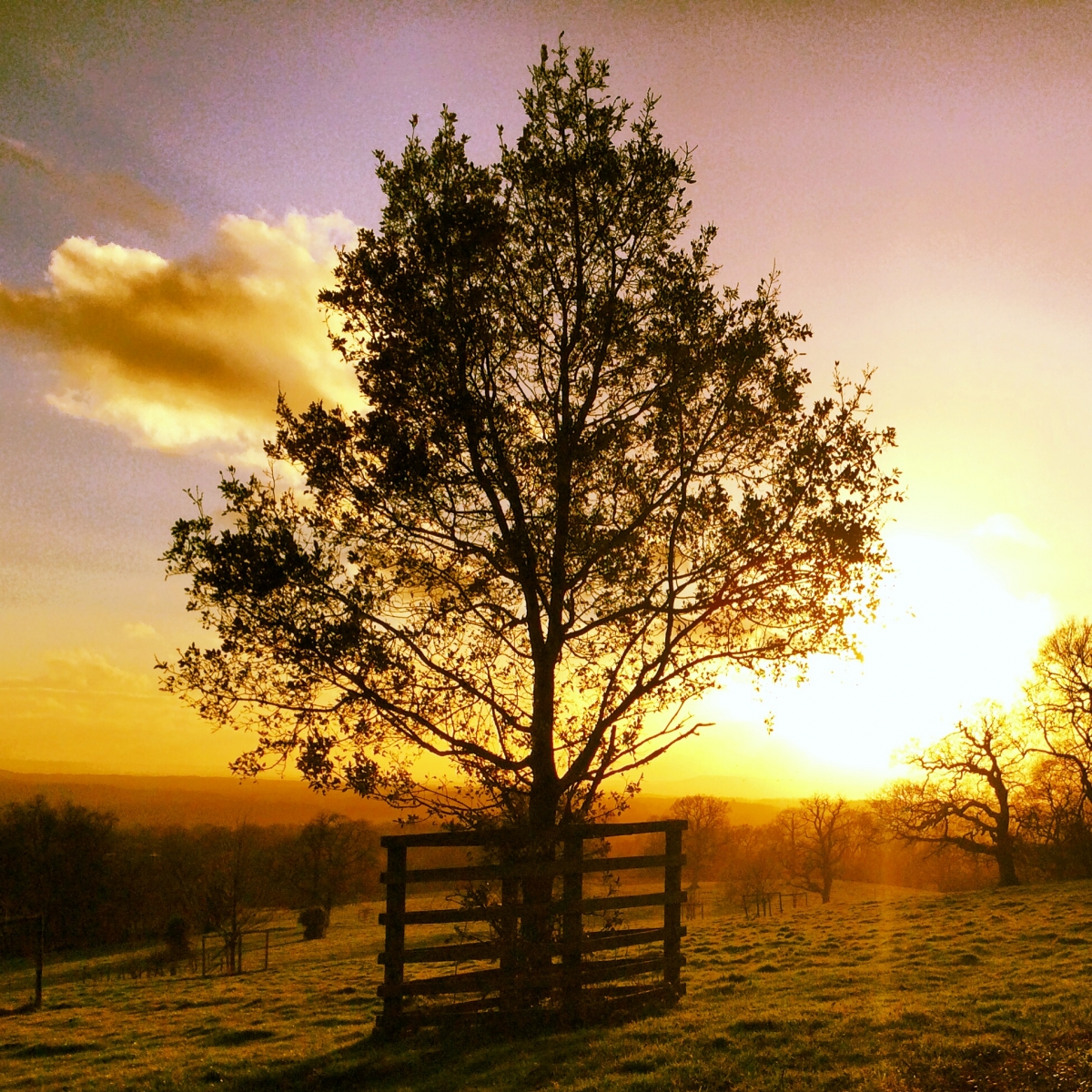 Sunset on Leith Hill, Surrey