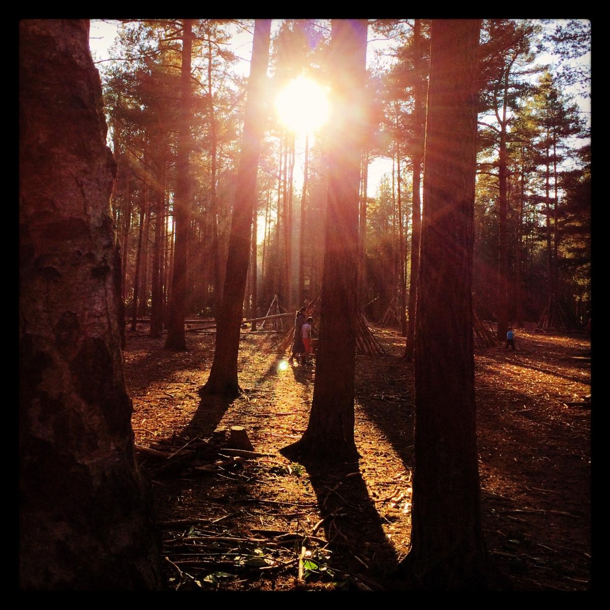Sun through the trees, Bracknell