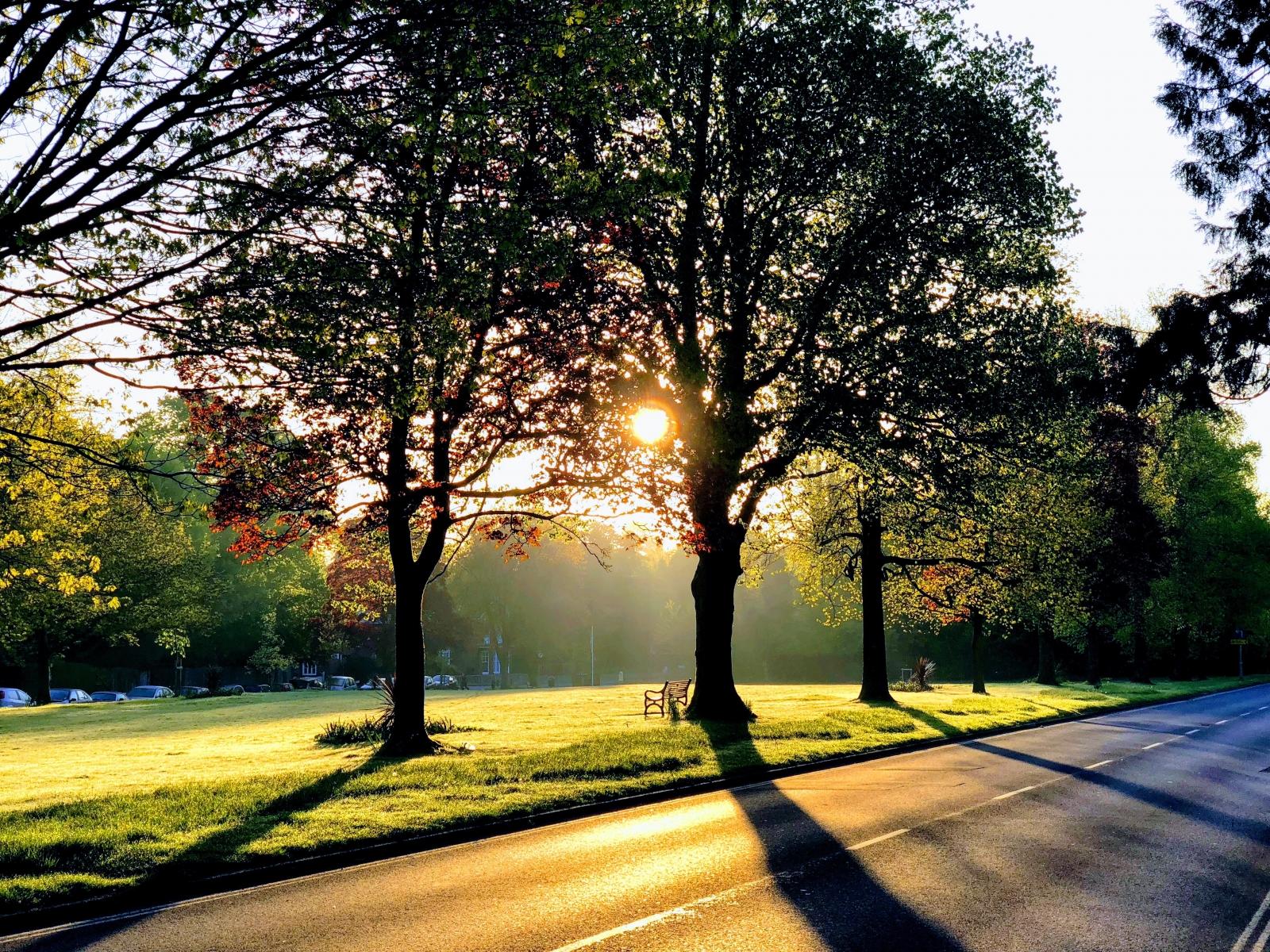 Dawn shadows, Muster Green, Haywards Heath